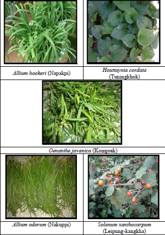 Selected medicinal plant sample
